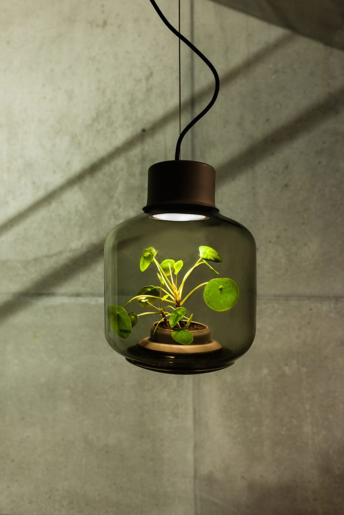 Nui Studio's Stylish Hanging Plant Lights