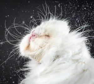 cats-mid-shake-5
