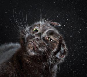 cats-mid-shake-6