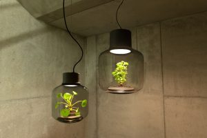 hangingplant_lamp2